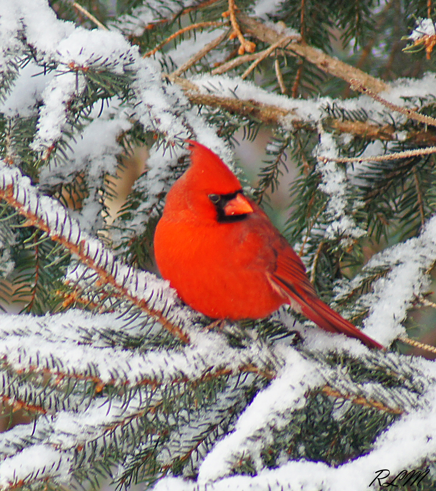 What You Need To Know About Birds in Winter