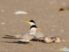 terns1-nancy-smith-coa