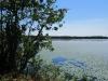 Whitesbog Preserve, Browns Mills - Karen Argenti