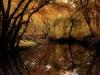 Wharton State Forest - Michael Hogan
