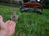 Trusting bunny