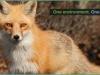 foxslide