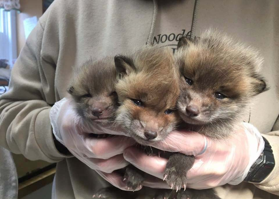 Member Feature: Woodford Cedar Run Wildlife Refuge