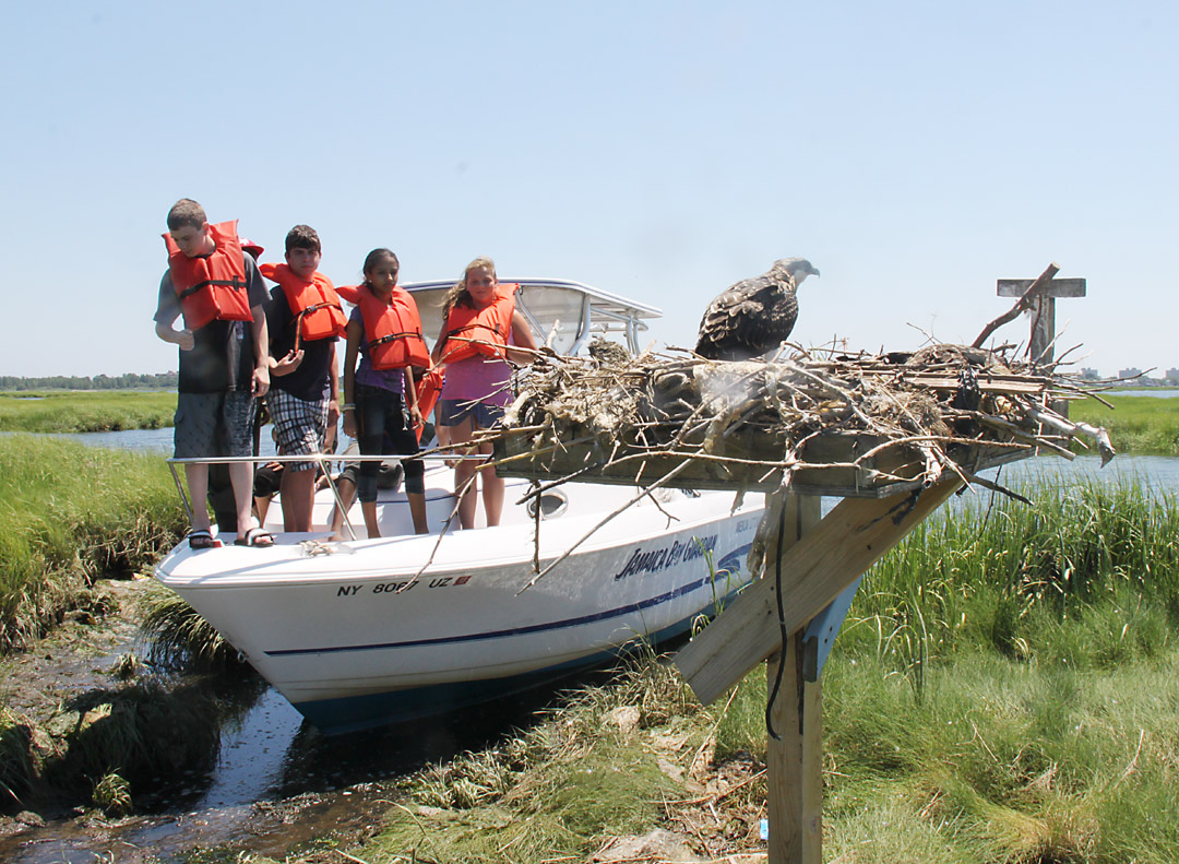 Member Feature: American Littoral Society