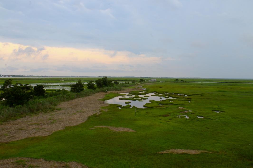 Member Feature: The Wetlands Institute