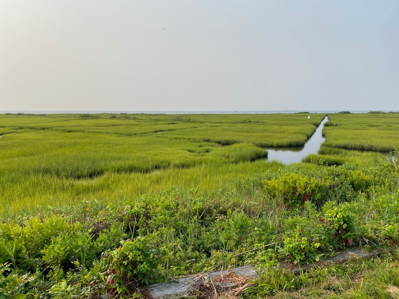 Their Survival Is Our Survival: A Case for Wetlands Conservation